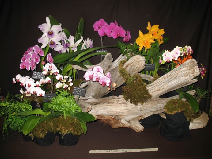 orchid display